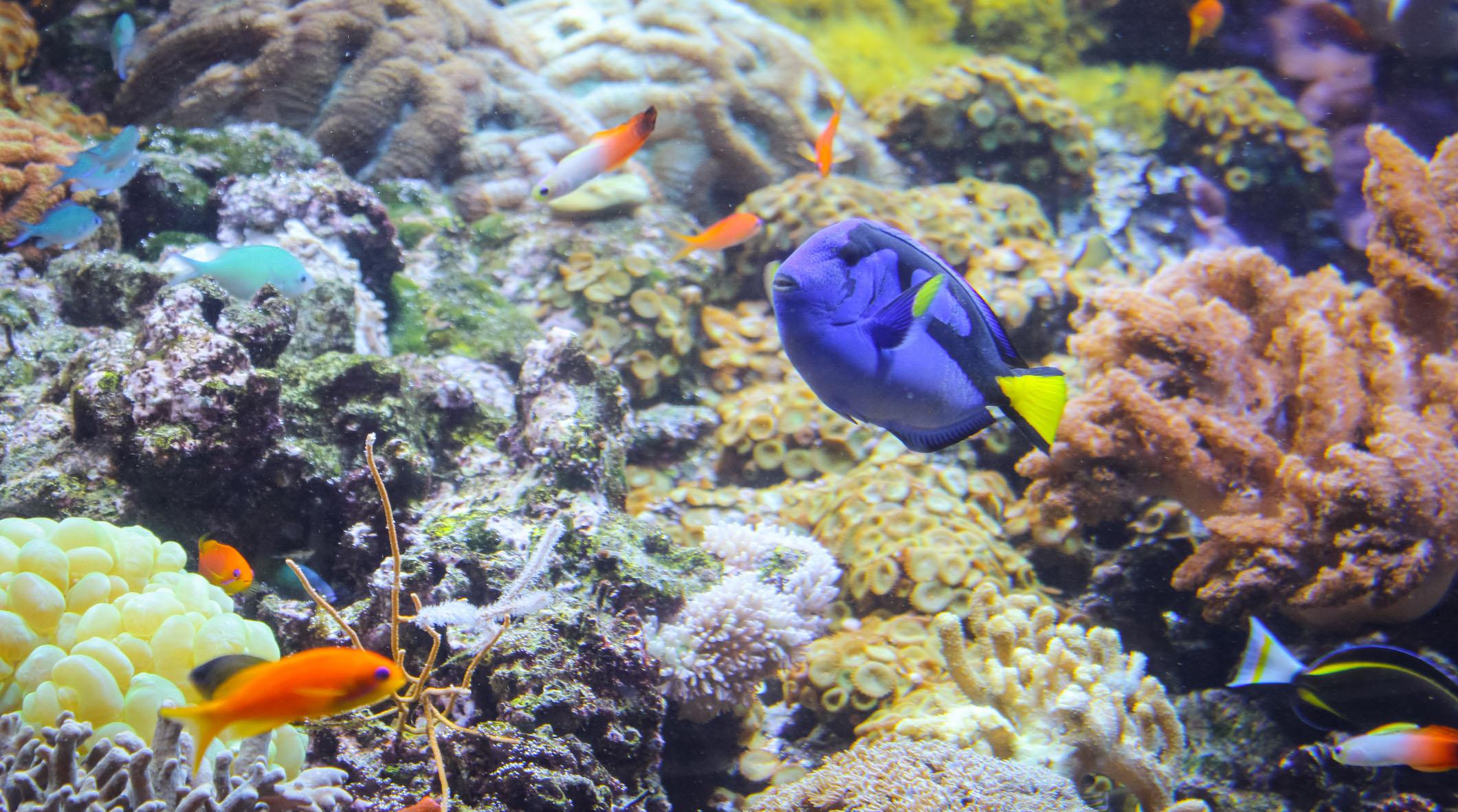 Virtual aquarium visits